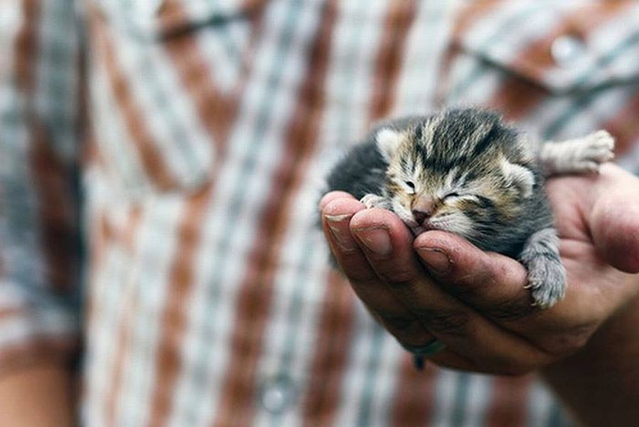 Почему мы любим кошек