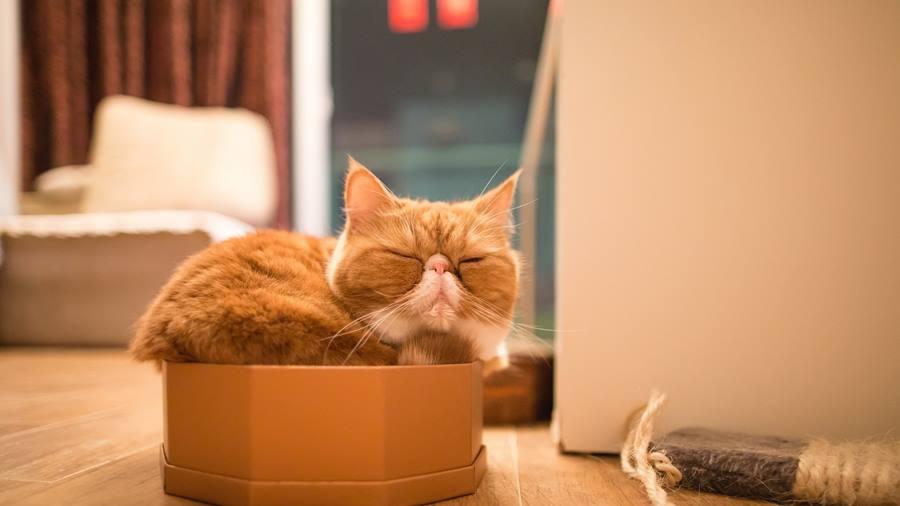 Почему мы любим котов