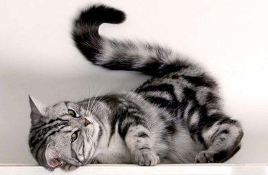 Почему нельзя дергать кошку за хвост