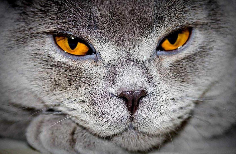 У кота слезятся глаза с кровью