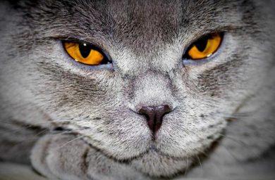 Почему у кошки гноятся глаза и нос