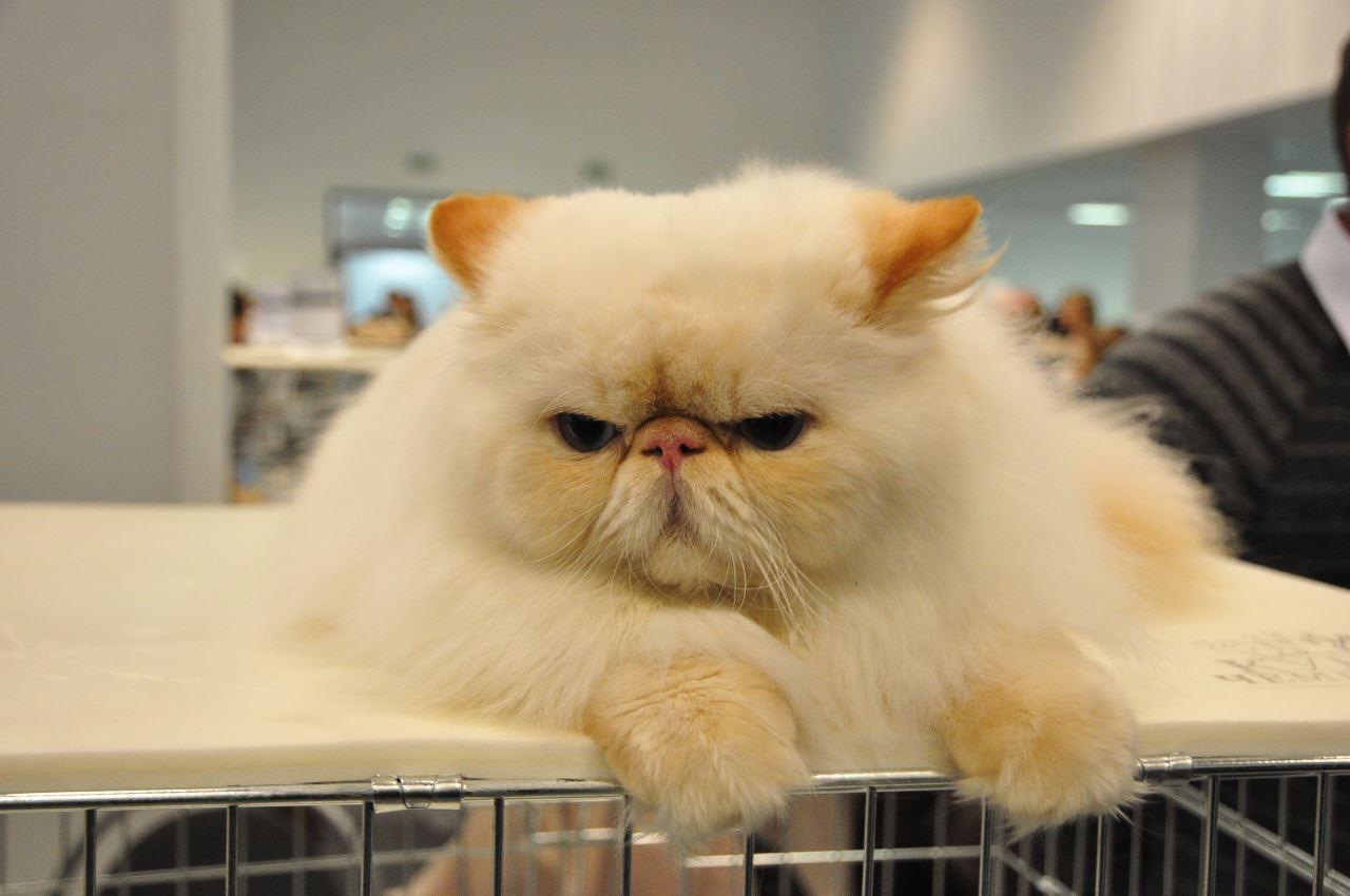 Почему у кота гноятся глаза