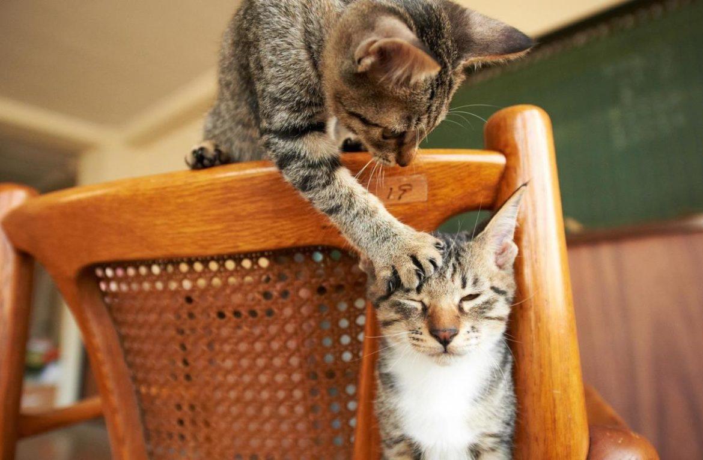 Почему в доме уживается несколько кошек?