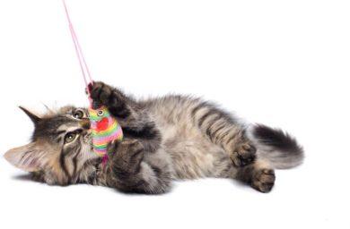 Подарок кошке на новый год своими руками