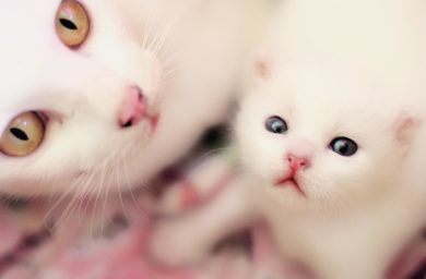 Помнит ли кошка своих котят