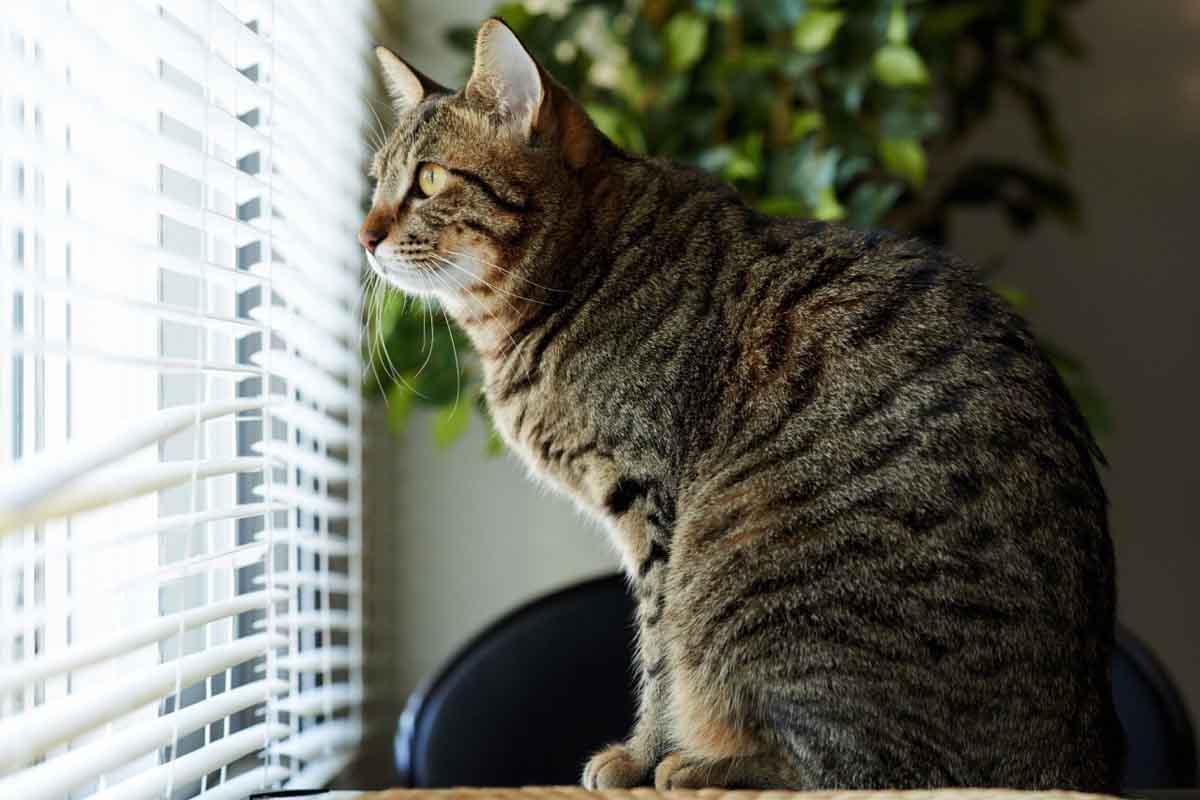 Помнят ли кошки своих хозяев
