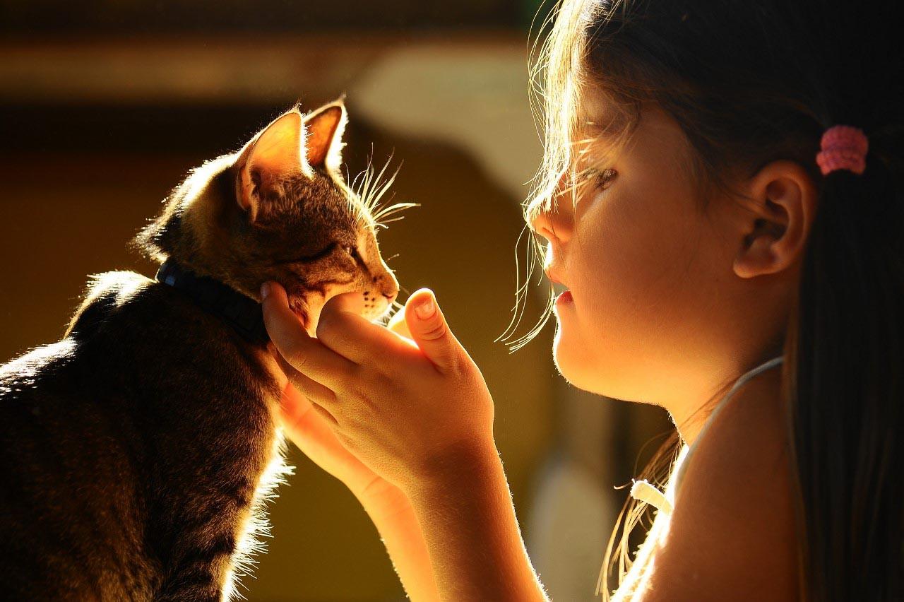 Понимает ли кошка человеческий язык