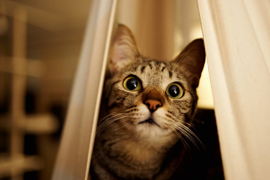 Кот зовет кошку звук