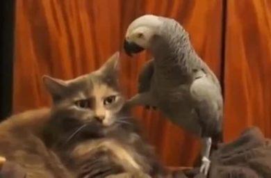 Попугай допрашивает кота - видео