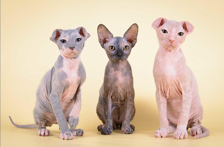 Левкой-кошка — фото усатых «цветов»