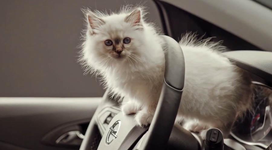 Порода кошки Карла Лагерфельда