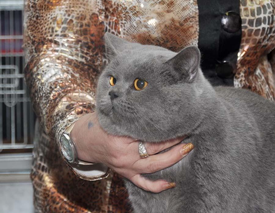 Породы самых крупных кошек с фотографиями