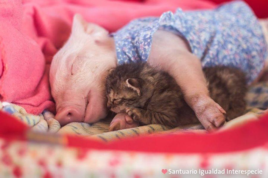 Поросёнок и котёнок