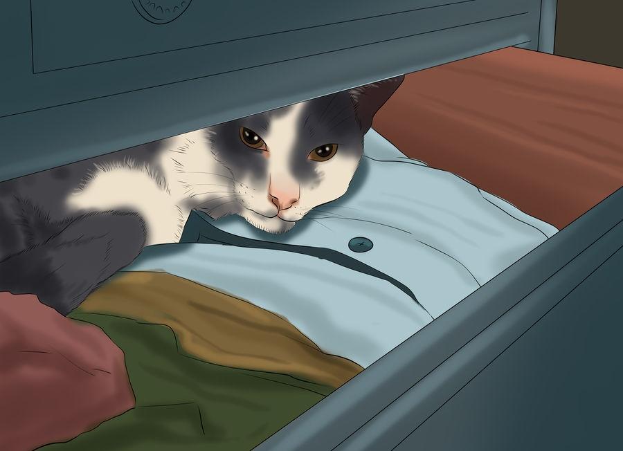 Кот пропал на даче, что делать