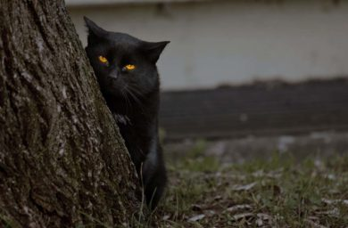 Правда ли, что кошки видят призраков