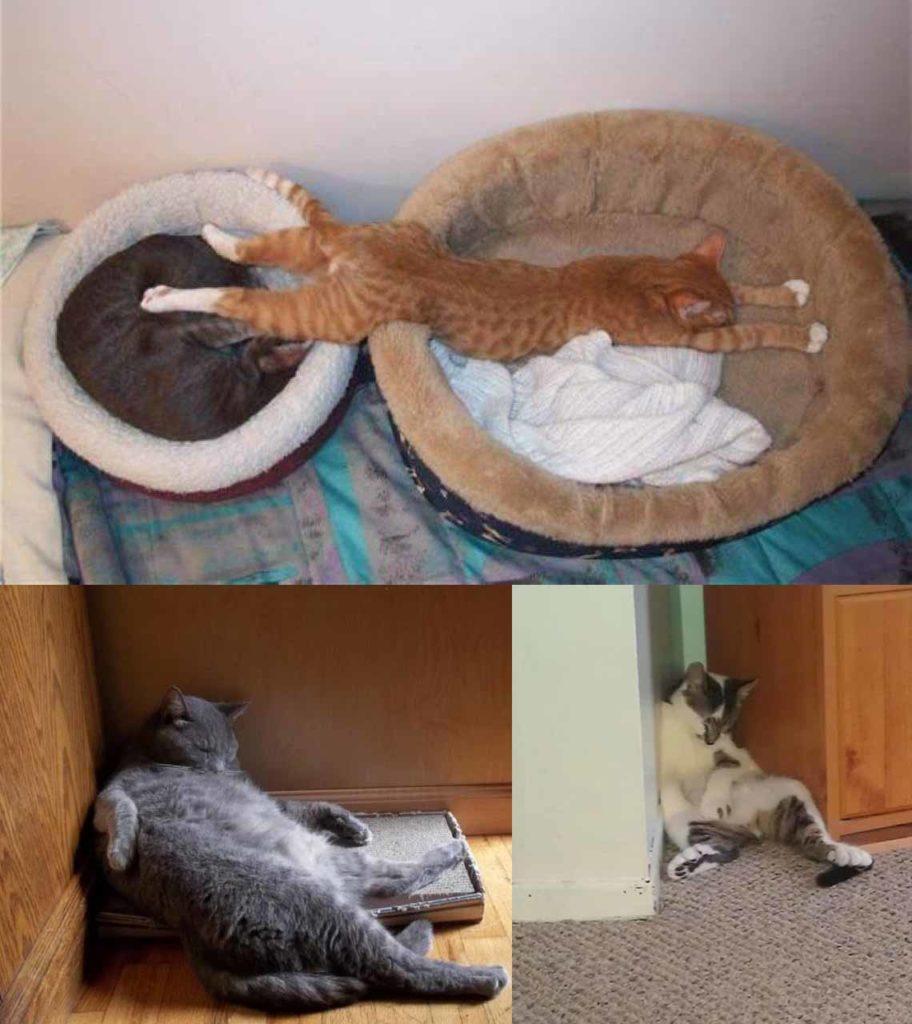 Прикольные фото спящих котов