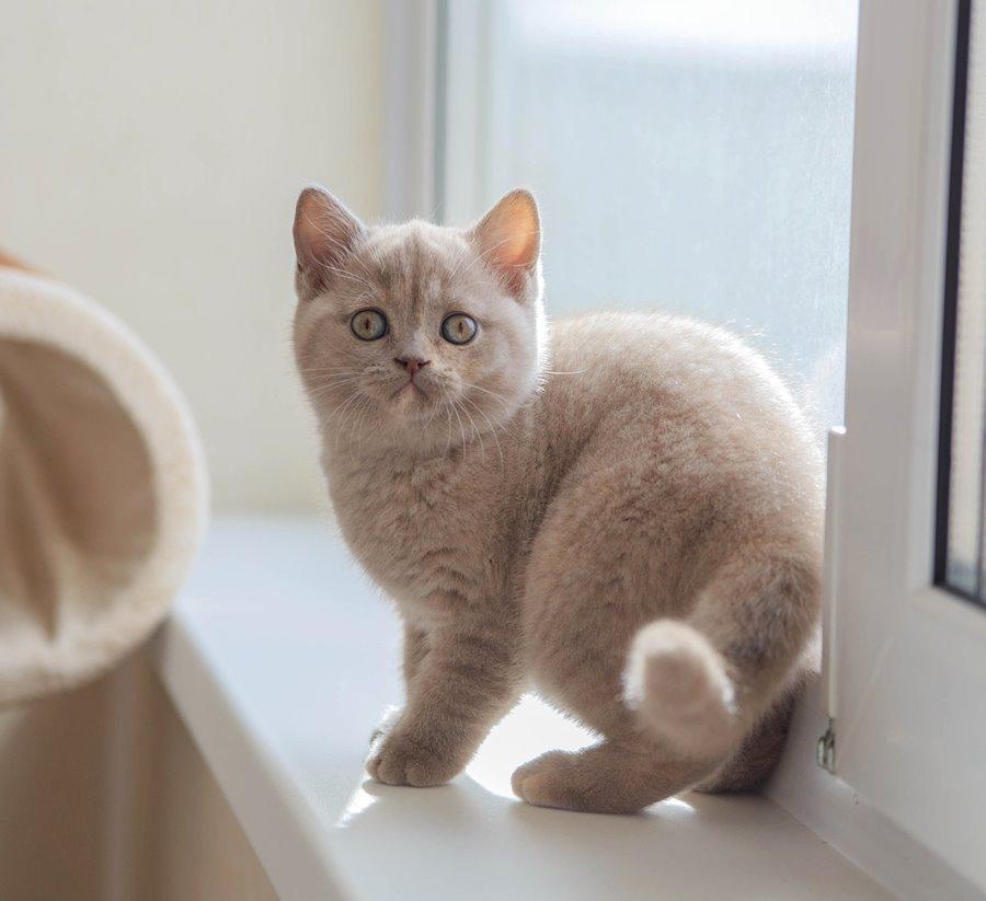 Прикольные имена для кошек британской породы