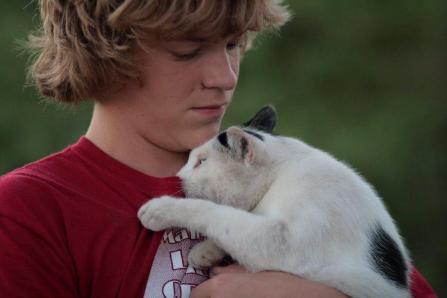Привязанность кошек к людям