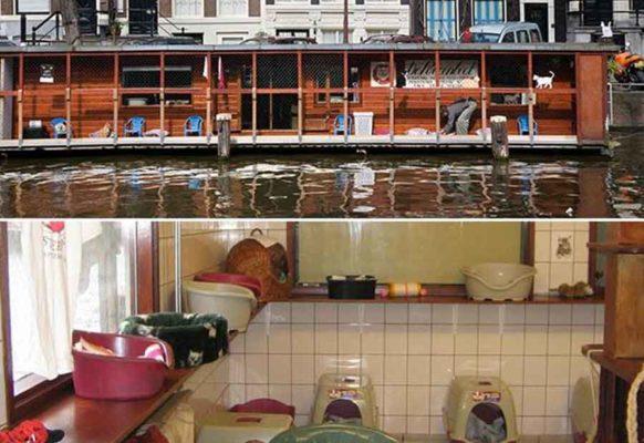 Приют на воде «Кошачья лодка»