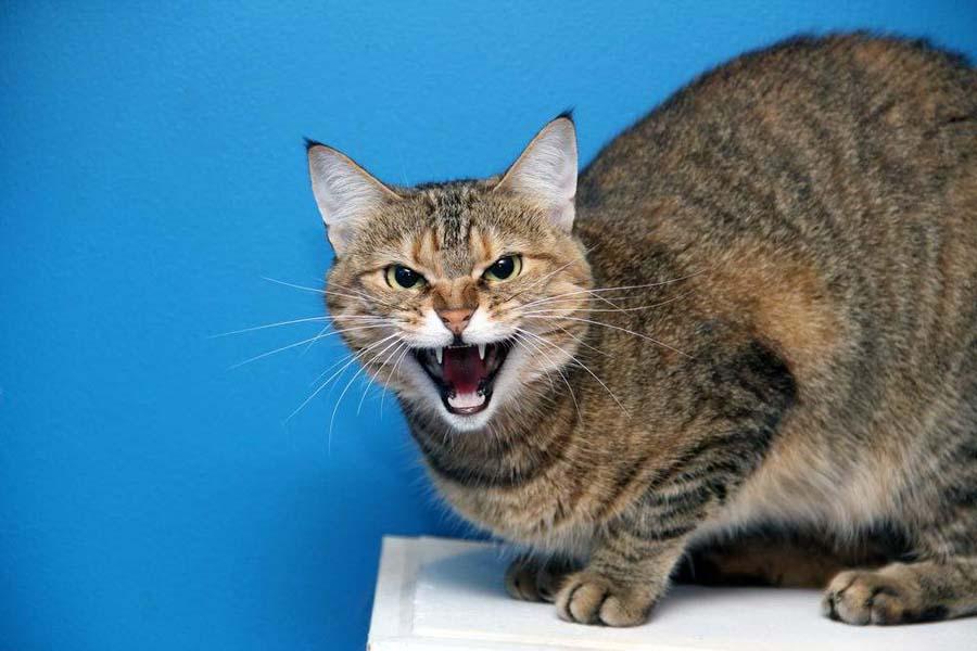 Признаки бешенства у человека после царапины от кошки