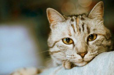 Признаки гастрита у кошек