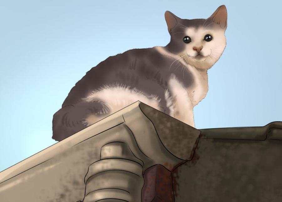 Пропал кот на даче - как найти
