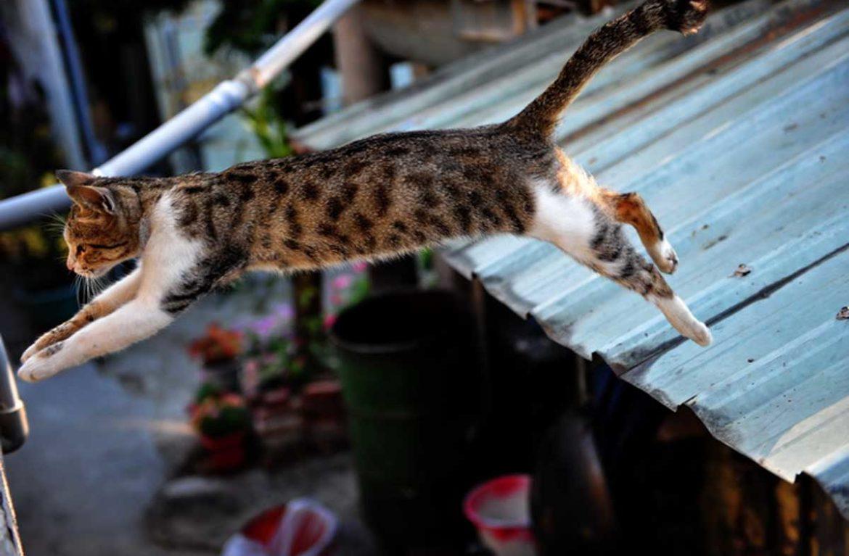 Прыгающая кошка, или фото Мисс Грациозность