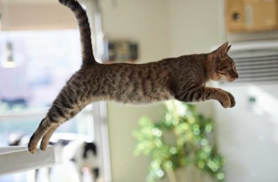 Прыгающий кот: видео