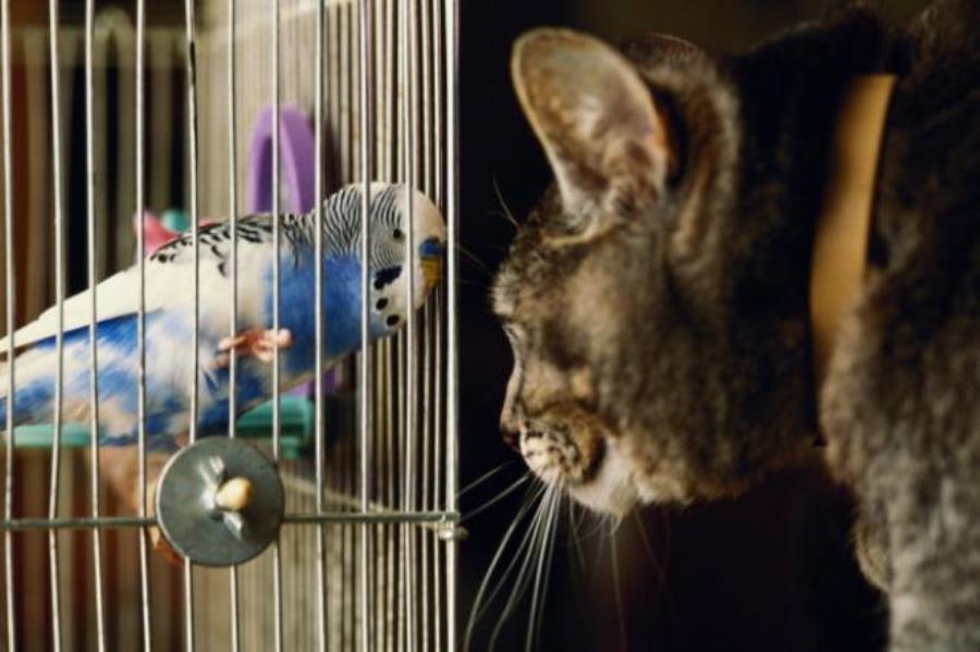 Птица и кошка не могут жить в одном доме