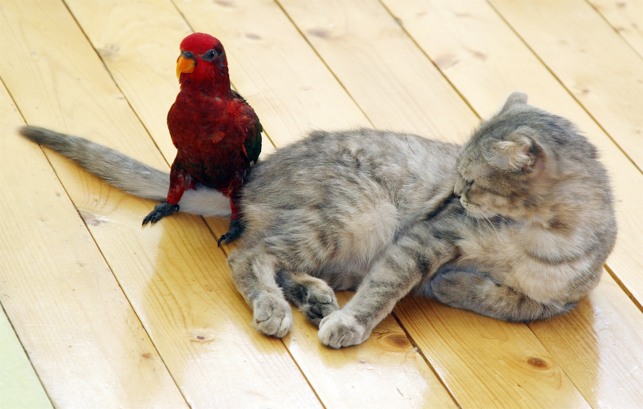 Птицы и кошки в доме
