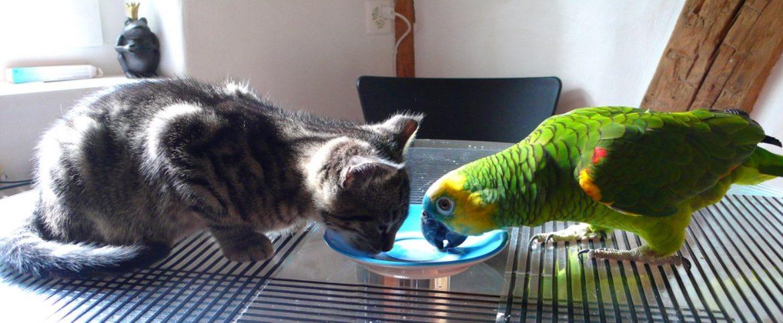 Птицы и кошки в доме – две вещи несовместные?