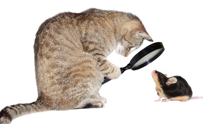 Кошачий рацион под лупой: вопросы и ответы