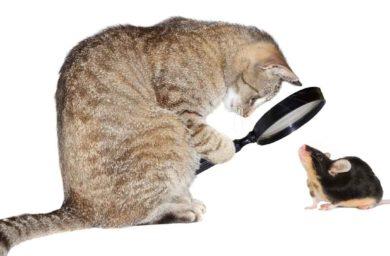 Рацион взрослой кошки