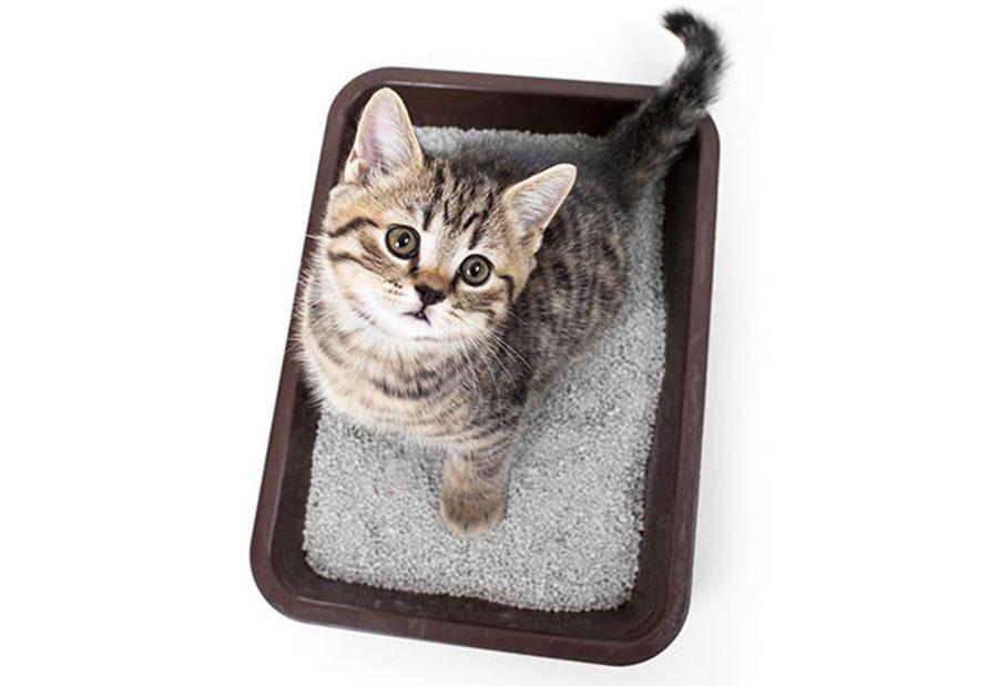 Расстройство желудка у кошки