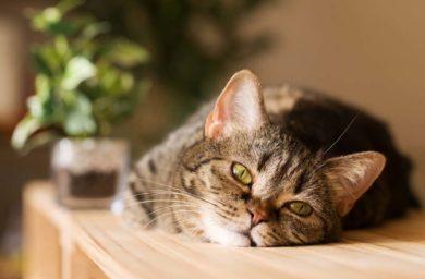 Расстройство желудка у кота