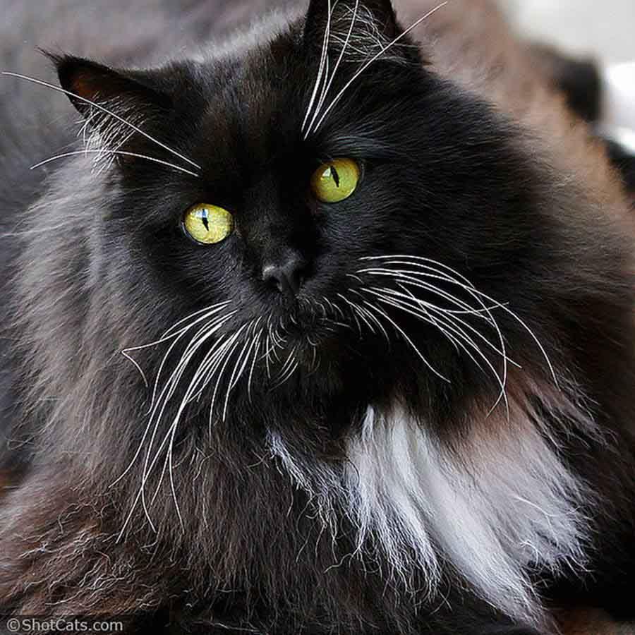 Редкая шерсть у кошек