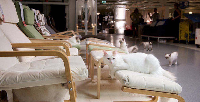 Уютная реклама с кошками — видео от IKEA