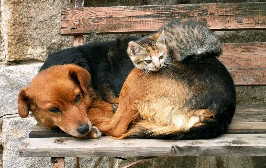 Решение проблемы бездомных животных