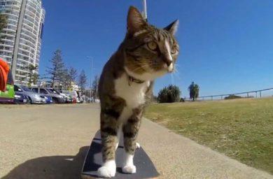Самая умная кошка в мире (видео)