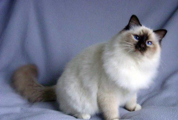Самые красивые модные кошки
