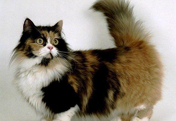 Самые модные кошки в мире