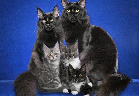 Самые модные породы кошек