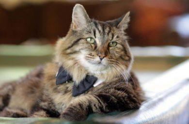 Самый старый кот в мире Вельвет