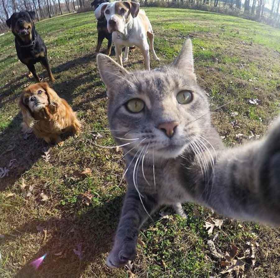 Селфи кота на фоне собак