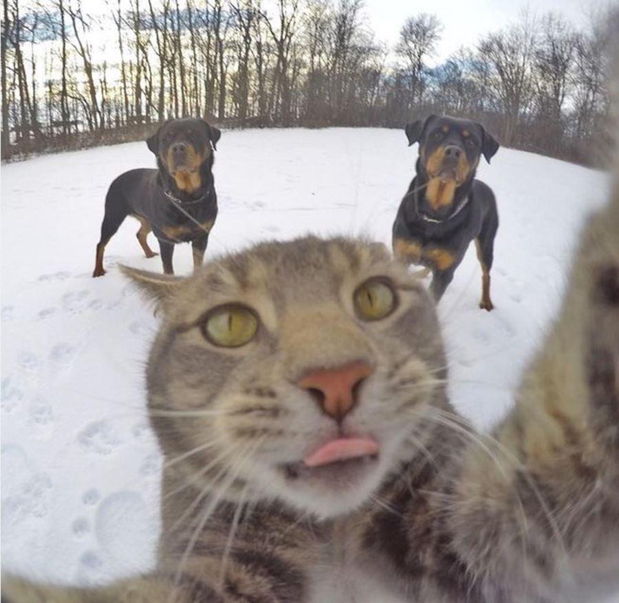 Селфи кота с собаками