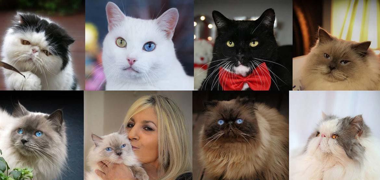 Семь котов и одна девушка