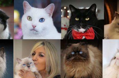Семь кошек и женщина