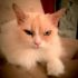 Кошка Жемчужина, или Несмеяна нашего времени
