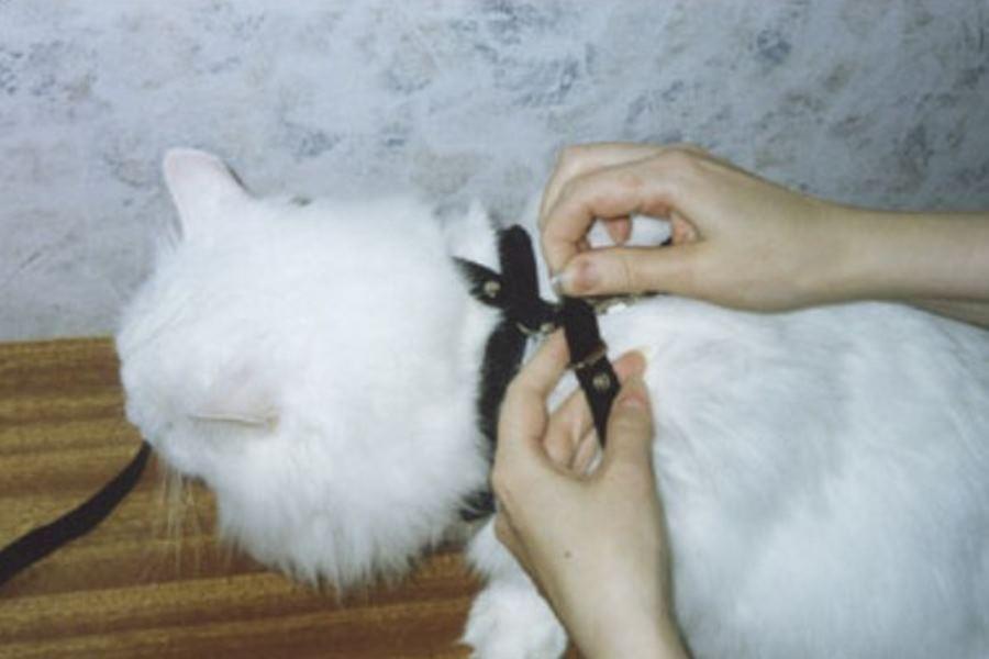 Шлейка для кошки – фото инструкция