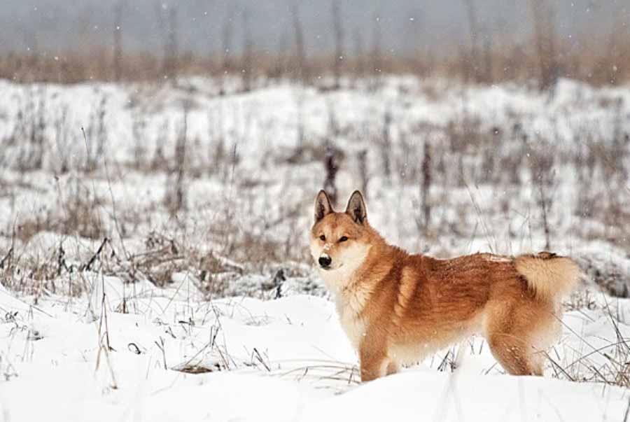 Сибирские тайны